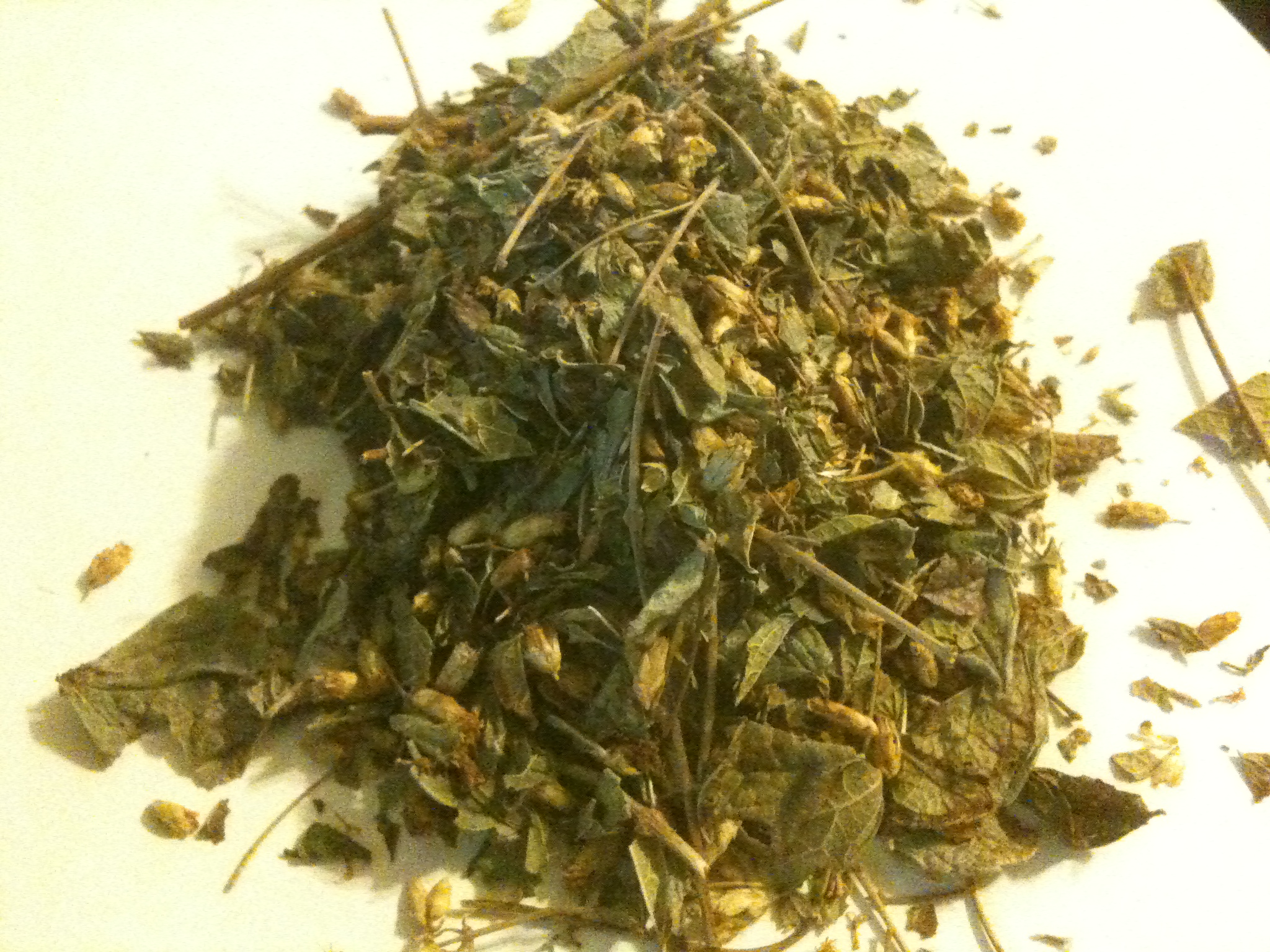 Calea Zacatechichi Dream Herb (Mexican Leaf )
